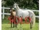 Amira amani   sold c75fadef197af07805fd83ed05cb3422