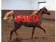 Arieanna ba sold f0c38fcc500043f7b0dbd6d38e52aded