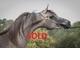 Bella exotyca sold 8665f6d2ae45bf9d887db4686e65d77e