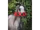 Dahlyah sold 9ac7a5df0c1fbb66ba003afde5b7149a