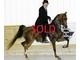 Luna bella sold 6333af991d8a465c9b0d6d14bd07701e