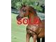 Ms khatalina sold fba92011f594aa62a9f93cf17edf62a2