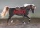 Max de winter 2 sold b034f1449a0f91e771c877912e307f56