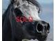 Moheba aljassimya   sold f57c0f38894f10266520f9417de257d5