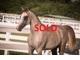 Pasha sba sold 7c5d3b44731b02957a3599e2c5407b24