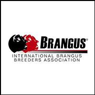 Brangus breed logo c91a56530a9f866a78620e65aec521fc