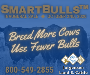 Jorgensen%20smartbulls%20%282%29%20300x250 662c19ae06b6d01a3cf484d1d753040a