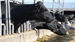Milk Production thumbnail