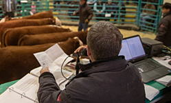 American Hereford Association thumbnail