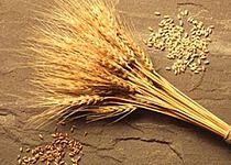 Wheat Balance Sheet thumbnail