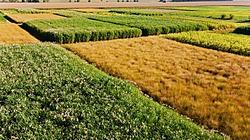 Corn Outlook thumbnail
