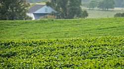Soybean Outlook thumbnail