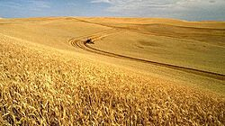 Wheat Outlook thumbnail