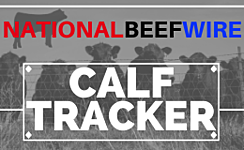 Calf Tracker - Steers and Heifers < 500 lbs.  thumbnail