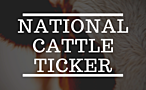 National Cattle Ticker - Steers and Heifers >800 lbs. banner