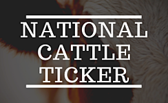 National Cattle Ticker - Steers and Heifers >800 lbs. thumbnail