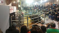 Cattle Prices  (Channel 31) thumbnail