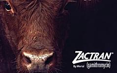 Zactran thumbnail