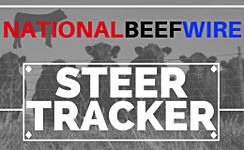 NBW Steer Tracker - Steers 700-899 lbs. thumbnail