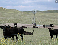 Sandhills - God's Own Cow Country thumbnail