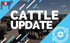 US Cattle Report by National Beef Wire thumbnail