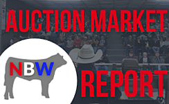Auction Market Reports thumbnail