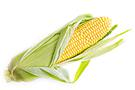 Corn banner
